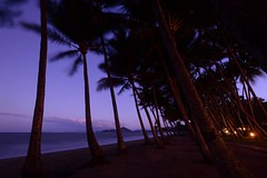 palm cove (moniq84) Tags: palm cove coconut sea sunset wind ocean lights beach australia trees water seascapes sand longexposure nightscapes nightphotography