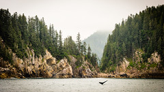 A Whale of a Good Time (James Duckworth) Tags: alaska jamesduckworthphotography coastal cold fjords fog landscape mist ocean rocks shore tail trees whale whatetail