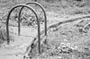 El paso del tiempo (inma F) Tags: comida guamasa piscina abandonado ruina jardín decadencia bw escaleras barandilla hojarasca swimingpool stairs garden ruins decaying waffle leaves