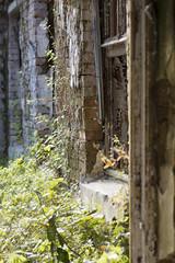 _FOT5145 (Marcin Leciak) Tags: opuszczony szpitalpsychiatrycznyotwock