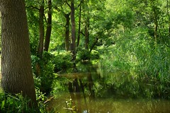 summer moods (JoannaRB2009) Tags: green plants nature flora tree trees water river forest summer light shadow dolinabaryczy lowersilesia dolnyśląsk polska poland sunny sunlit oak