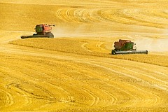 Wheat Harvest Wasco County (jim.choate59) Tags: combine combineharvester harvest wheat field grain farm wascocountyoregon oregon thedalles centraloregon jchoate yellow rural summer august hot on1pics b700 dufuroregon dufur
