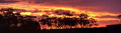 White River_DSC_3601_stitch_D (renrut01) Tags: sunset white river poochera australia sale merino sheep raining eyre peninsula south