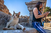 Cat Sitting On Ancient Ruins, Ephesus, Izmir Province, Aegean Region, Turkey (Feng Wei Photography) Tags: ancient traveldestinations ruin nopeople retrostyle monument clearsky turkeymiddleeast famousplace aegean travel outdoors horizontal unescoworldheritagesite lowangleview ephesus anatolia internationallandmark cat colorimage ismir unesco greekculture roman oldruin selcuk ismirprovince eastasia ancientcivilization ancientrome archaeology landmark turkishculture tourism aegeanturkey turkish