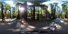 Armstrong Redwoods State Natural Reserve, Guerneville, CA (renedrivers) Tags: