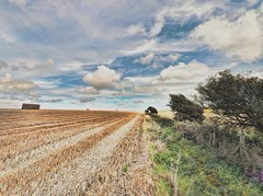 FieldMarginPath-Edit - Copy (iankellybn26dj) Tags: sussex england brighton downs falmer woodingdean landscape light summer uk photo