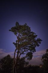 Starry Tree on St Martha's Hill (Jenny.Lawrence) Tags: astrophotography perseid meteor shower meteorshower stars star stargazing stargazer starphotography night nightphotography landscape 35mm sony sonyalpha sonya7 zeiss 28 long exposure longexposure