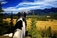 Chief On High Alert (cowgirlrightup) Tags: chief painthorse cowgirlrightup canadianrockies alberta 40d
