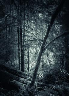 Rainforest Glade - IR Duotone