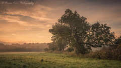 Sunday Morning (.Brian Kerr Photography.) Tags: cumbria landscapephotography lazonby edenvalley photography photo briankerrphotography mistymorning mist sunrise sunday morning nature naturallandscape natural outdoor outdoorphotography opoty sony a7rii availablelight formatthitech landscape rivereden trees field tree