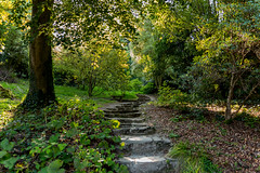 Early Autumn Steps (trevorhicks) Tags: path walk leaves bush plant tree national trust fishacre outdoors tamron canon 6d bench sunshine ivy