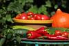 CKuchem-5664 (christine_kuchem) Tags: basilikum bauerngarten biogarten bioqualität ernte erntezeit fleischtomate garten gemüse gemüsegarten grün gurke hokaido kräuter kürbis nutzgarten paprika peperoni pflanze rarität sommer sorte sorten sortenvielfalt tomate vielfalt zucchini bio biologisch frisch gelb gesund lecker natürlich orange reif rot selten unbehandelt