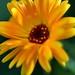 Yellow flower ⚘