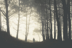 el miedo (xelea) Tags: 7dwf crazytuesdaytheme trees in the picture smile saturday smileonsaturday treesinthepicture