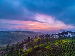 cukul pangalengan (sandilesmana28) Tags: tea plantation green cloud slow speed nature indonesia west java