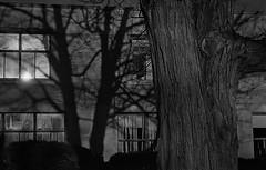 Shadows on the Corner (coreycwgriffin) Tags: shadow building kodaktrix nikon tree newyork ny trix brick nikonn8008s n8008s potsdam shadows kodak