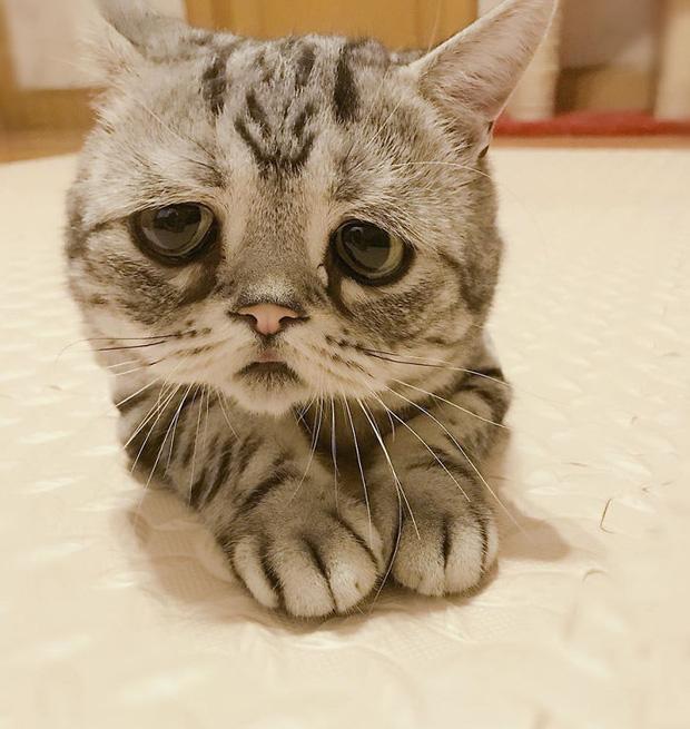 Nhìn bộ mặt buồn thiu như mất sổ gạo của boss mèo đáng yêu, con sen nào cũng muốn ôm lấy một cái - Ảnh 9.