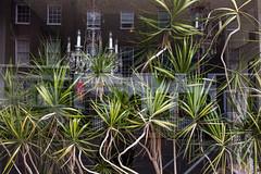 A window on Upper Montagu Street (Gary Kinsman) Tags: marylebone fujix100t fujifilmx100t w1 london uppermontagustreet 2017 forma window reflection layers plants chandeliers streetphotography