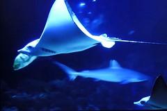 P2110122 Aquarium Hamburg