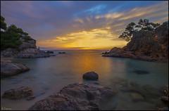 El sol de la mañana. (antoniocamero21) Tags: playa cala mar cielo rocas pinos color foto sony paisaje marina amanecer brava costa roig cap platje daro girona catalunya