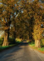 chestnut avenue (K_R_R_2) Tags: sony a6000 nex selp18105g tree chestnut avenue chestnutavenue trees