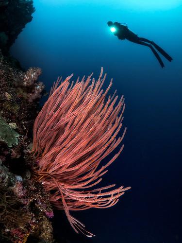 CelebesDivers - underwater 76