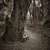 the little bench (stormiticus) Tags: deerpark fairfax oak mf mediumformat rolleiflex 28e kodak tmy2 xtol blogged film analog blog narrative