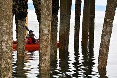 Hidden Star's!!! (Reed 1949) Tags: ferrydock pilings kayakers starfish seashells people pugetsound edmondsbeach purple water washingtonstate waterfront nikon nikond5200 tamron tamron18270mm