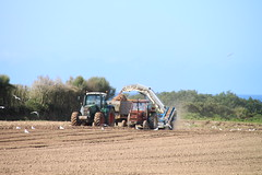 onions harvest, Brittany (Jeanne Menjoulet) Tags: finistère bretagne brittany onions harvest seagulls rural scene tracteur culture agriculture oignons