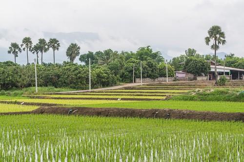 doi inthanon - thailande 57
