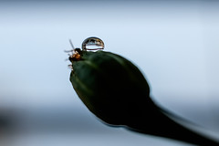 FSCF5277 (Deepak Kaw) Tags: reflection fujifilm drop droplet macro color composition