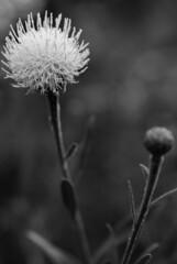 Summer memories (HansPermana) Tags: flower garden nature summer zürichbotanischergarten garten