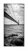 Humber Bridge (August 2017 #2) (Lazlo Woodbine) Tags: humberbridge humber bridge england britain uk countryside pentax k7 1855 1855mm august 2017 silhouette bird britishcountryside northyorkshire yorkshire river hull bw blackwhite blackandwhite mono monochrome