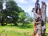 tronco4 (yajat54) Tags: nogales sonora picnic terrenos cabañas cabins nature naturaleza