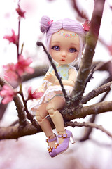 Can you see me? ☆ (Shimiro Kestrel) Tags: bjd doll pukifee fairyland pkfante pukifeeante ante tiny tinybjd cute kawaii spring sakura flower nature portrait outside bjdphotography dollphotography bjdportrait bjdcustom fullcusto toyphotography abjd