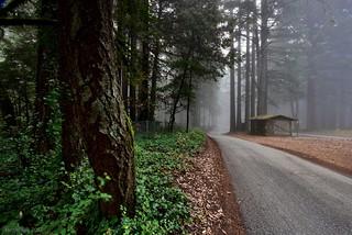 Foggy Path|Skyline Blvd., San Mateo, California