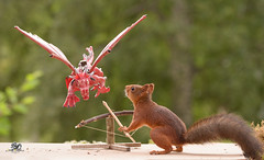 squirrel and a  Catapult with dragon (Geert Weggen) Tags: red nature animal squirrel rodent mammal cute look closeup stand funny bright sun backlight walk tail travel departure leave missed up rise ballast holiday journey trip tour drive run castle games thrones building bird nopeople photography dragon catapult attack geert weggen sweden jämtland bispgården ragunda