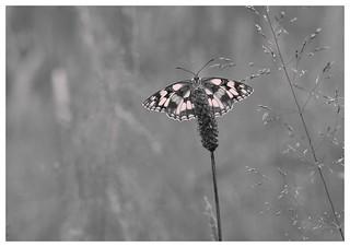 En noir et blanc ! Demi-deuil.