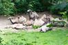 Zoo Erfurt 08 (akumaohz) Tags: deutschland germany zoo tierpark nikon d3200 tier tiere animal animals drausen outdoor erfurt tiergarten tiefenschärfe schärfentiefe natur nature säugetier braun brown kamel camel herde
