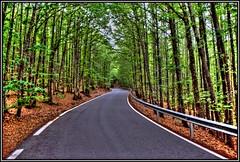 La carretera... (Jose Roldan Garcia) Tags: naturaleza natural colores carretera bosque belleza castaños aire luz libre l