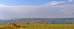 Serra da canastra parte alta (Conexão Selvagem) Tags: observaçãodeaves serra canastra parque nacional cerrado aves bird wildlife galito rapina gavião