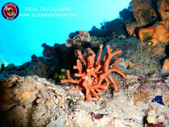 "Kalymnos Diving • <a style=""font-size:0.8em;"" href=""http://www.flickr.com/photos/150652762@N02/37058637766/"" target=""_blank"">View on Flickr</a>"