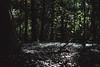 18:31 (Qtn.C) Tags: trees nature shaftoflight forest deepinthewoods boisdevincennes hotdayofsummer green explore exploreyourcity takeawalk blur bokeh fujifilmxt1