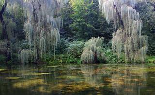 Pond. Malievtsy, Ukraine