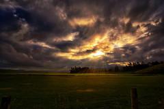 A Breath of Light (Kevin_Jeffries) Tags: sheep pasture light kevinjeffries nikon d7100 f28 1116mm moabones newzealand excavationsite lightrays landscape cloud sky rays sunlight historicsite sunset sunrays nature field