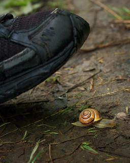 escargot en danger