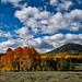 Cedar Breaks Fall Colors