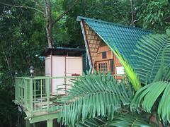 Belum Eco Resort (whitworth images) Tags: jungle tasiktemenggor hut building asia southeastasia leaf room travel palm malaysia trees aframe resort accomodation tree belum forest verandah perak laketemenggor green landing tourism deck gerik