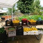 "Fremont's Free Farmers Market <a style=""margin-left:10px; font-size:0.8em;"" href=""http://www.flickr.com/photos/61961974@N03/37396982441/"" target=""_blank"">@flickr</a>"