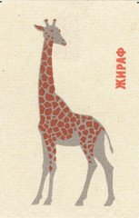 russian matchbox label (maraid) Tags: russian russia ussr matchbox label packaging animal giraffe leningradzoo 1960s 1965
